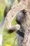 Stock Image : Reindeer closeup