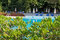 Stock Image : Relaxation zone with greenery and swimming pool