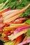 Stock Image : Rhubarb