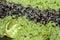 Stock Image : Rice Salade