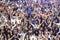 Stock Image : Soccer fans