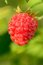 Stock Image : Raspberry