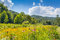 Stock Image : Roan Mountain State Park
