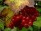 Stock Image :  Rode viburnum