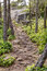 Stock Image : Root covered forest path, East Sooke Regional Park near Victoria