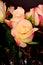 Stock Image : Rose Floral arrangement