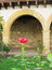 Stock Image : Rose over arch