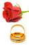 Stock Image : Rose and wedding rings