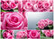 Stock Image : Roses collage