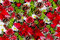 Roses and pine cones decoration