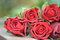 Stock Image : Roses