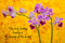 Stock Image : Rumi -Orchid on yellow
