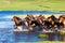 Stock Image : Running Horses in lake