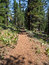 Stock Image : Sagehen Creek Trail