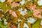 Stock Image : Salmon Salade
