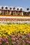 Stock Image : Southern California springtime flowers