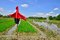 Stock Image : Scarecrow in the paddy field.