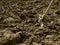 Stock Image :  Schop in de grond
