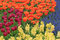Stock Image : Sea of Flowers