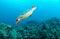 Stock Image : Sea turtle swimming underwater