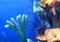 Stock Image : Sea urchin Diadema setosum