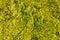 Stock Image : Sea weed
