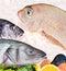 Stock Image : Seafood arrangement
