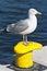 Stock Image : Seagull