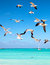 Stock Image : Seagulls flying in the sky