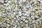 Stock Image : Seashells