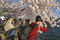 Stock Image : Selfie and Photography at the Cherry Blossoms