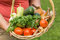 Stock Image : Senior woman holding a basket with vegetables