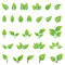 Stock Image : Set of green leaves design elements