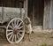 Stock Image : Sheep at Wagon Wheel