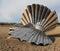 Shell sculpture