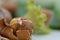 Stock Image : Shelled hazelnuts