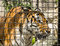 Stock Image : Siberian Tiger