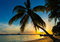 Stock Image : Silhouette of a coconut palm tree