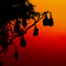 Stock Image : Silhouetted fruit bat on tree at sunset