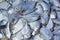 Stock Image : Silvery pomfret fish