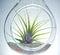 Stock Image : Plant Terrarium