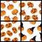 Stock Image :  Sistema inconsútil del modelo de las calabazas de Halloween