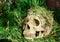 Stock Image : Skull in the backyard