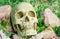 Stock Image : Skull in the garden