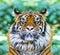 Stock Image : Sleeping tiger