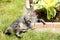 Stock Image : Sleepy cat