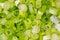 Stock Image : Sliced Green Onion