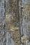 Stock Image :  Sluit omhoog van doorstaan hout