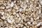 Stock Image : Small fresh mushrooms