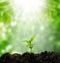 Stock Image : Small tree new life